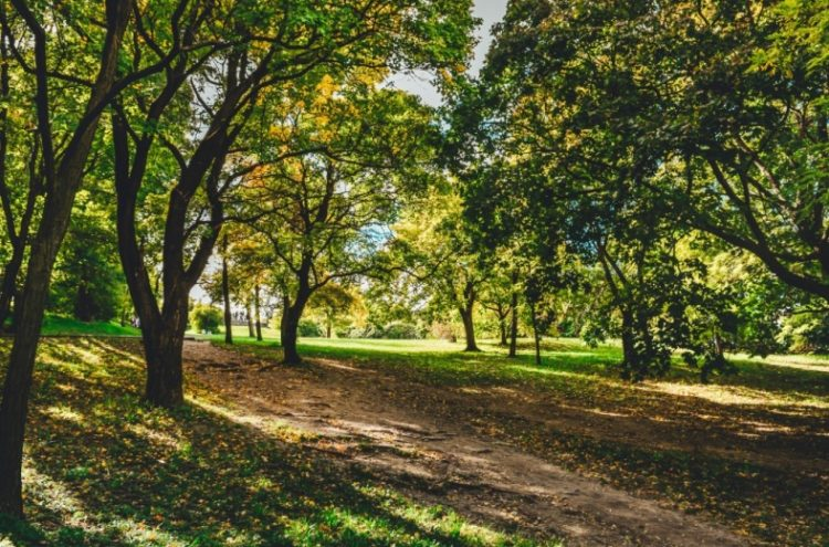 Жители Басманного района Москвы просят городские власти не допустить вырубку деревьев в Даниловской аллейке